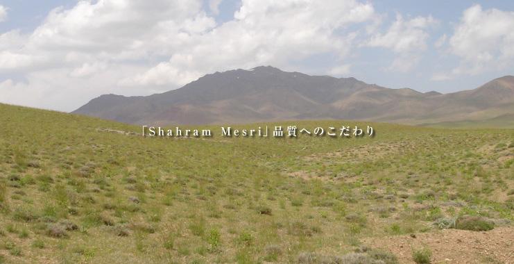 「Shahram Mesri」品質へのこだわり